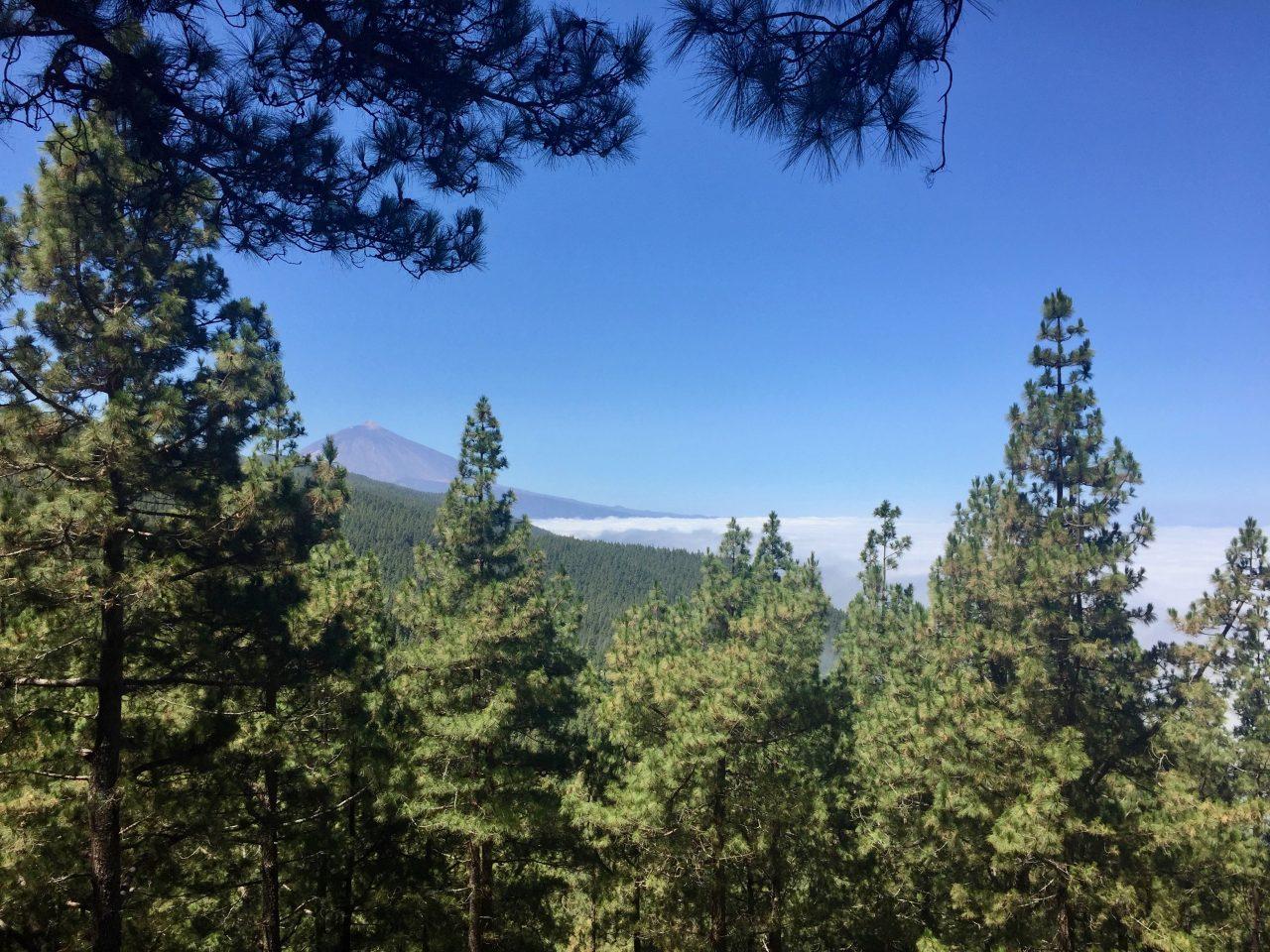 Blick von einem der Aussichtspunkte der TF-24 noch im Wald Richtung Teide. Die Wolkendecke an der Grenze der Inversionsschicht bei ungefähr 1500 m ist deutlich zu sehen.